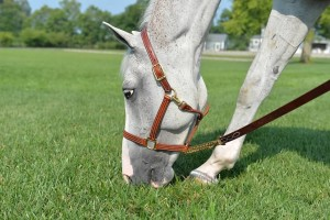 Lead Ropes and Halters from Walsh Products